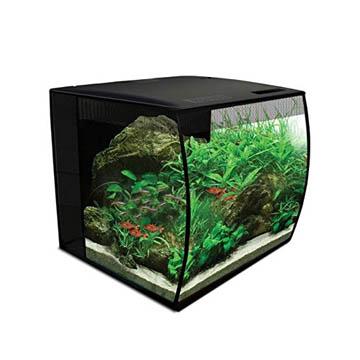 meilleur aquarium